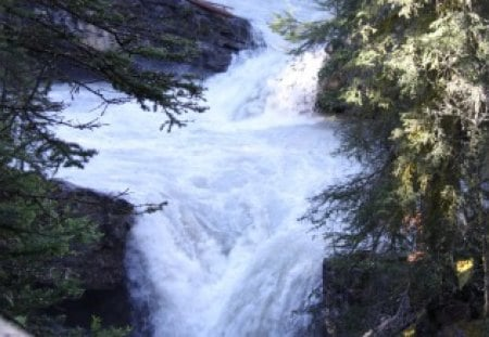 Rapid waterfalls Banff Alberta - white, waterfalls, Rivers, green, trees, Photography