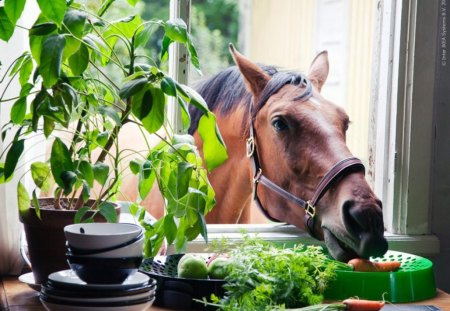 Unexpected guest,but Welcome♥ - guest, brown, fresh, welcome, home, carrots, horse, kitchen, green, plants, love, nature, unexpected, animals