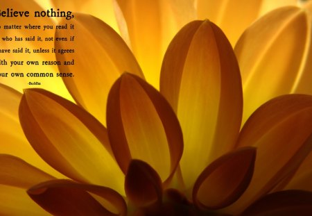 BUDDHA QUOTE - zen, flower, buddha, nature, believe, floral