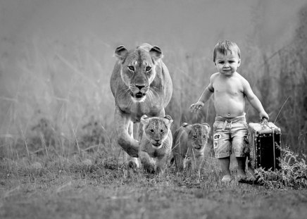 That's it, we're leaving - lioness, fun, travel, cute, kid, cubs