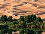 Dazzling Desert Oasis