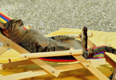 Image result for cat on holiday
