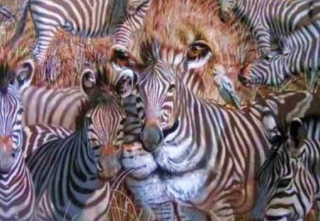 Hidden Lion Among The Zebras - animals, illusions, zebra, wildlife, lions, safari, nature