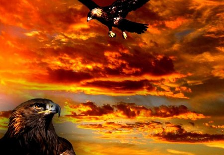 Golden Eagle - vulture, sunset, baby bird, bald eagle, falcon, nature, golden eagle, fantasy, animals, wildlife