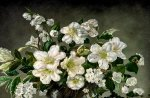 White Flower Bouquet F1