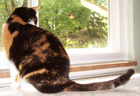 Calico Cat Vs Calico Moth Cats Animals Background Wallpapers On