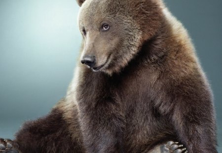 Cute Bear - grisly, cute bear, wallpaper, brown bear, smile