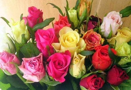 Roses for Patrice - pink, colors, yellow, flowers, red, roses