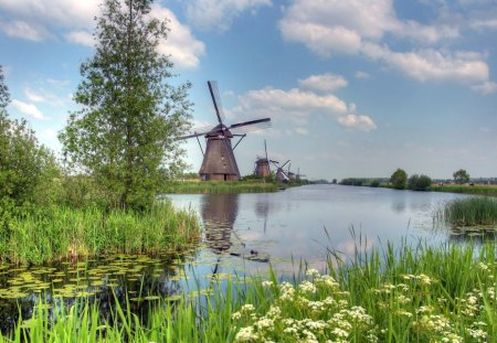 PASTORAL WINDMILLS - lakes, windmills, trees, holland, water lilies, netherlands, waterscapes, wildflowers, dyke, lilypads