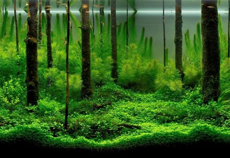 Underwater Forest - goldfish, aquariums, forests, underwater, fish tanks