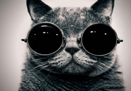 Cool Kitty - artist, video, wallpaper, grey, definition, gfx, electronic, high, music, kitty, promoter, cat, tranzino, cool, dubstep, helynt, lessons, youtube