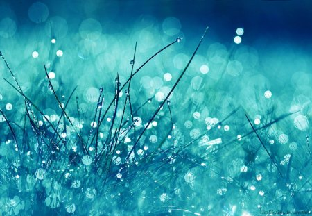 WATER DROPS ON GRASS - digital, grass, photography, wet, outdoors, water, abstract, outside, delicate, rain, sparkling