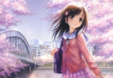 Cherry Blossoms - blossoms, pretty, girl, cherry