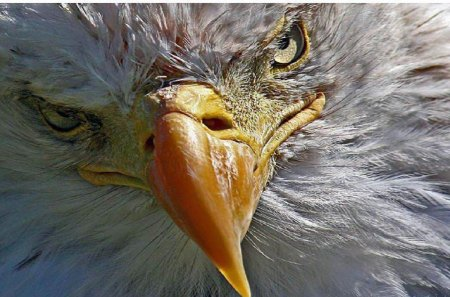 Eagle - usmc, marines, recon, marine corps
