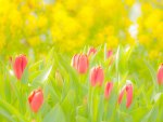 Bright garden♥