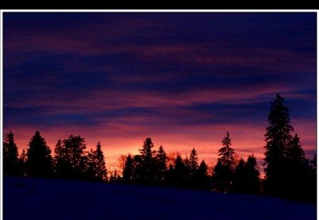 beautiful sunset - sunset, orange, trees, clouds
