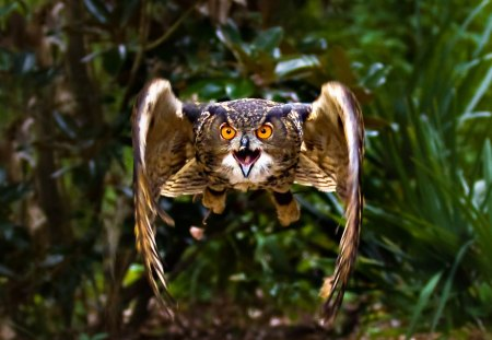 IM COMEN AT YOU - flight, mean, barn, owl