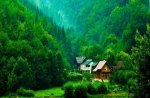 nature of all shades of green
