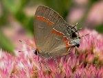 Buzy Butterfly