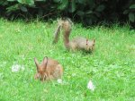 bunny and squirrel hanging out