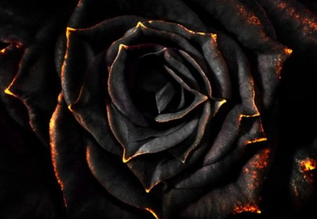 Black Rose Photography Abstract Background Wallpapers On Desktop