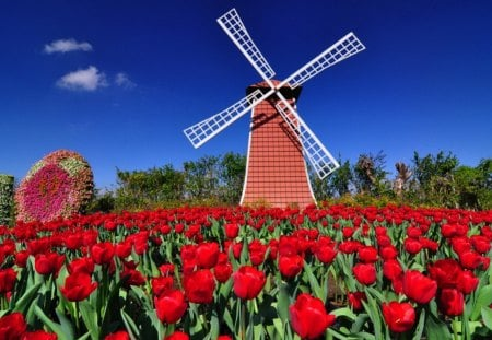 Mill among tulips - red, pretty, windmill, mill, beautiful, clouds, holland, nice, flowers, tulips, lovely, wind, sky, trees, summer, nature, meadow, field