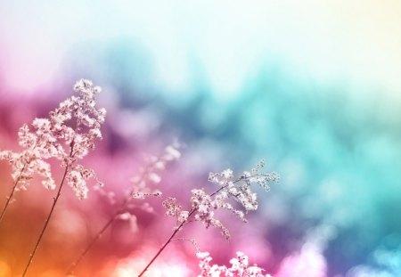 3d flower - pink, petals, blue, flower