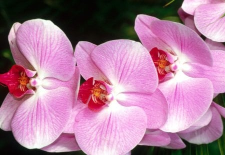 beautiful orchids - colombian, beatiful, paradise, tags