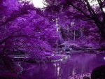 Purple Japanese garden