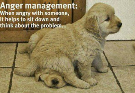 ANGER MANAGEMENT - two, anger, puppies, cute