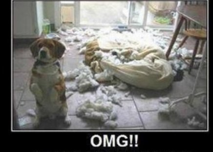 OMG - pillow, funny, feathers, puppy