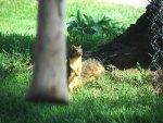 Squirrelin around!