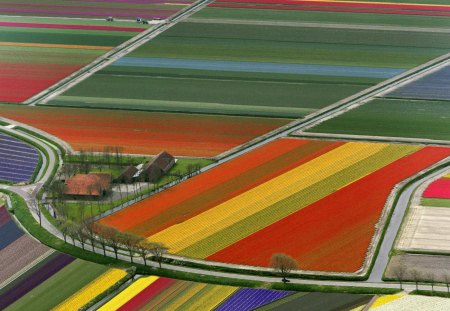 Holland Flower Fields - colorful, flowers, fields, tulips, holland