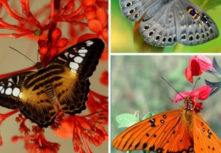 THREE BEAUTIES - pretty, butterflies, beautiful, collage