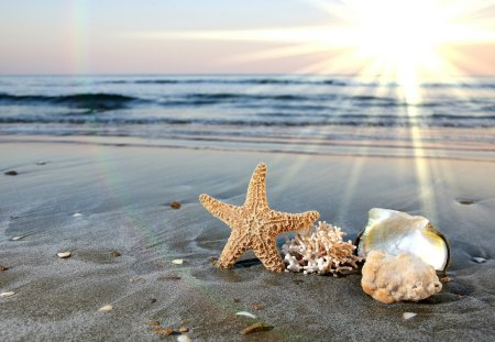 Sea Symbols - beach, sand, sun, symbols, shells, sea