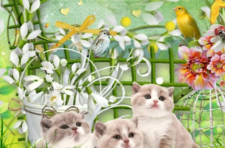 Image result for summer kitties images