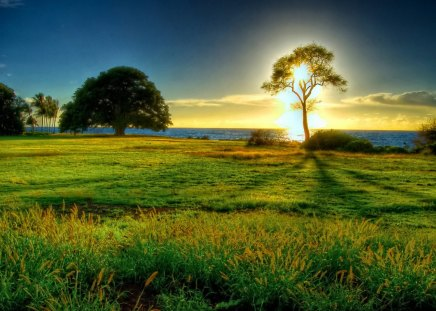 Sea sunrise - glow, grass, dazzling, sunny, shine, beautiful, sunset, clouds, nice, flowers, sunrise, light, lovely, sky, trees, rays, summer, nature, meadow, field