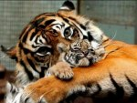 she is very beautiful mother