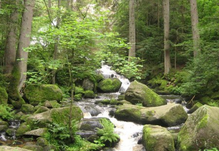 cascading stream in triberg germany - stream, forest, cascade, stones