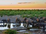Sunset with Elephants