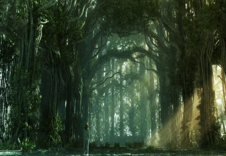 Fantasy Forest Fantasy Amp Abstract Background Wallpapers