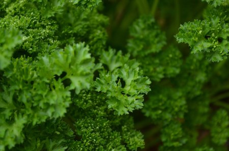Parsley - das, adsa, ads
