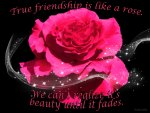 ♥ Red Friendship Rose ♥