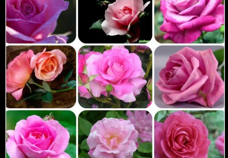 PINK - pink, pretty, collage, rose