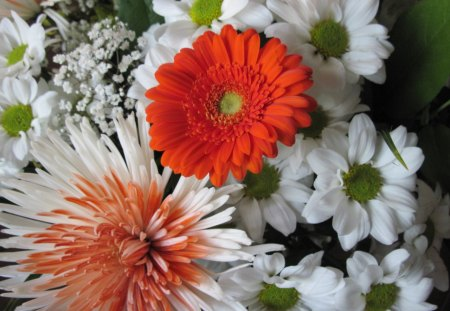 Bouquet of flowers 22 - flowers, orange, white, photography, Daisy, red