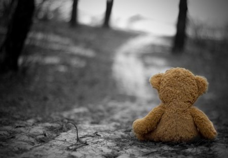 Loneliness - loneliness, photography, bear, teddy