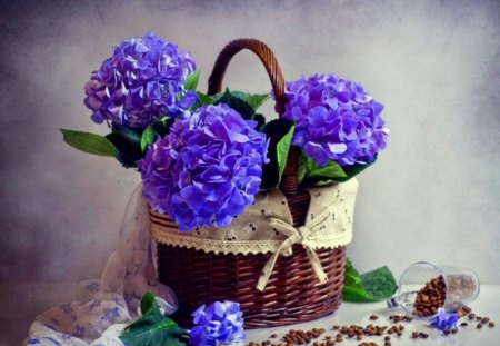 Hydrangea blues - flowers, blue, coffee, hydrangea, basket
