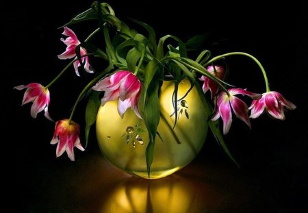 Touch of Gold - pink, tulips, black, gold vase, white, reflection