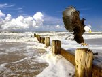 Eagle Landing on Post