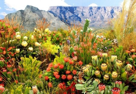 CAPE SPRING - cape town, grass, proteas, fynbos, south africa, mountains, plants, flowers, fields